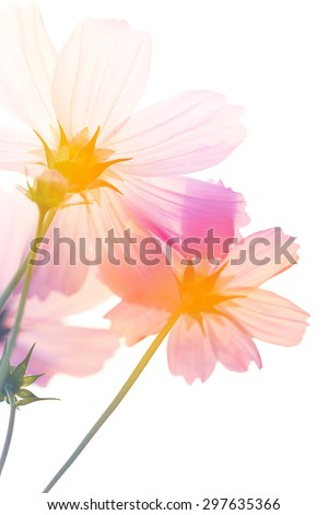 Beautiful flowers made with color filters, flower background. - stock photo
