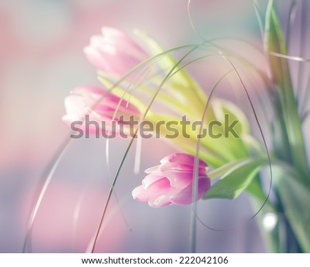 beautiful flowers made with color filters, in very soft focus  - stock photo