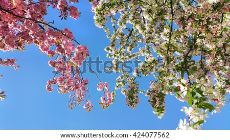 Beautiful flowers of spring trees on blue sky background - stock photo