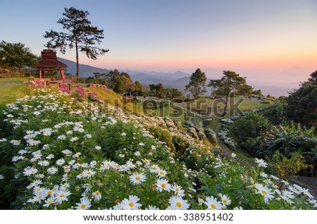 Beautiful flowers on a mountain