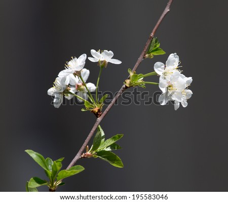 beautiful flowers on a tree branch in nature