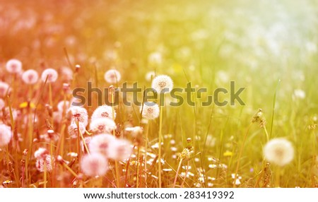 beautiful flowers on abstract background photographed close up - stock photo