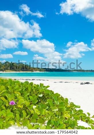 beautiful flowers on the beach of mauritius island - stock photo