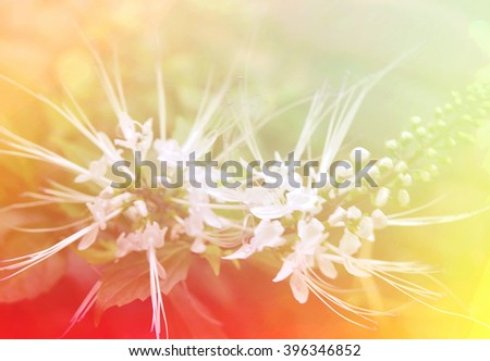 Beautiful flowers soft blur colors in pastel tone for background
