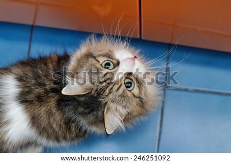 Beautiful fluffy cat  - stock photo