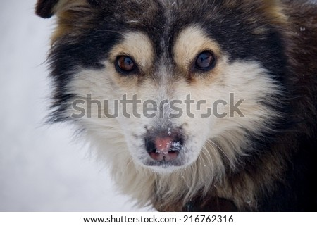 Beautiful, fluffy dog on white, snowy background