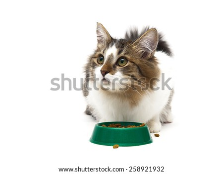 beautiful fluffy kitten sits beside a bowl of food on a white background. horizontal photo. - stock photo