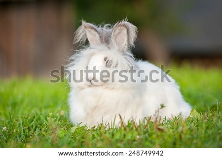 Beautiful fluffy white angora rabbit sitting outdoors in summer - stock photo
