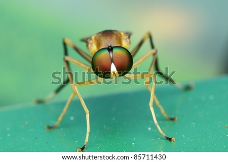 beautiful fly - stock photo