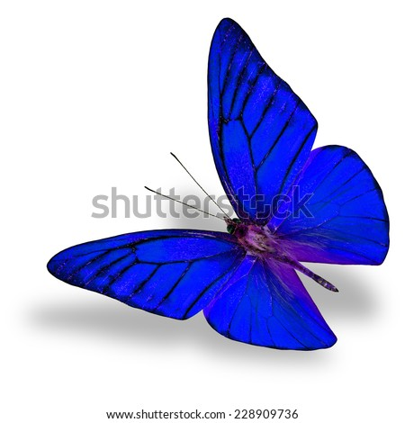 Beautiful Flying Blue butterfly (Appais Nero) in fancy color profile in natural color isolated on white background with soft shadow beneath - stock photo