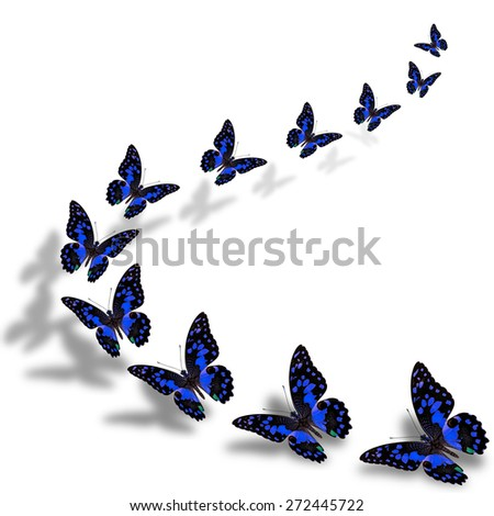 Beautiful flying blue butterfly in a great series of taking off with nice shadow beneath - stock photo
