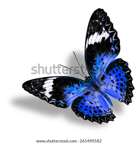 Beautiful flying blue butterfly (Leopard Lacewing female) on white background with nice shadow beneath - stock photo