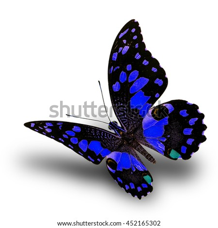 Beautiful flying blue butterfly, Lime butterfly (Papilio demoleus) in fancy color profile on white background with soft shadow beneath - stock photo