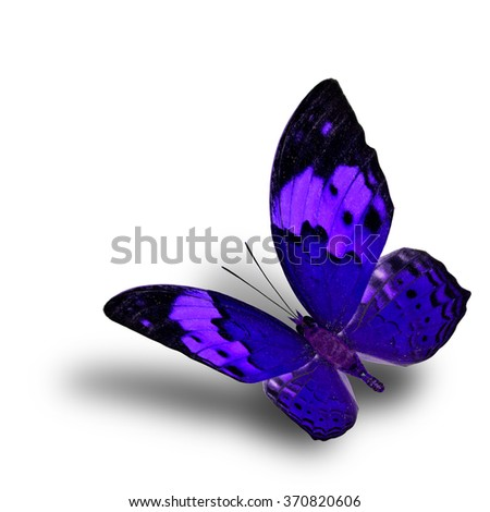 Beautiful flying blue butterfly, the Rustic butterfly (Cupha bilberg) in fancy color profile with soft shadow beneath - stock photo