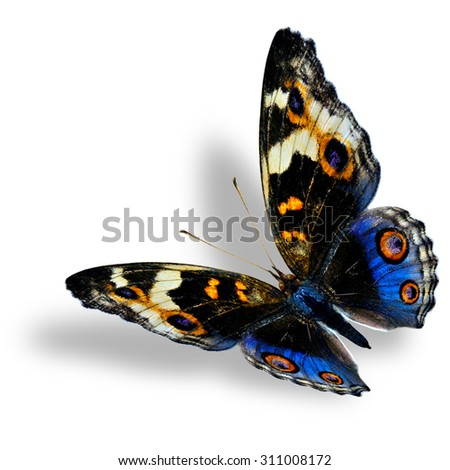 Beautiful flying blue pansy butterfly with nice shadow beneath on white background - stock photo