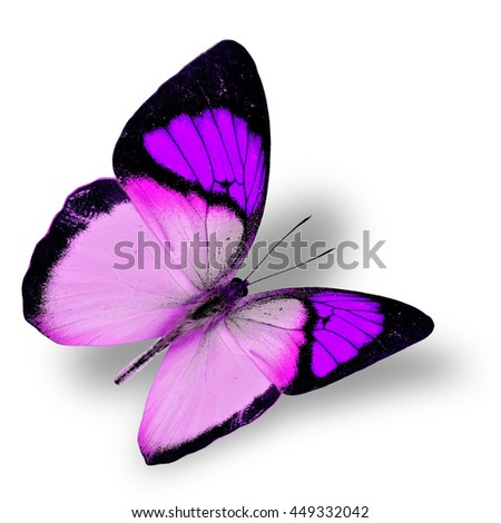 Beautiful flying bright purple butterfly, yellow orange tip butterfly in fancy color transparency with soft shadow beneath - stock photo