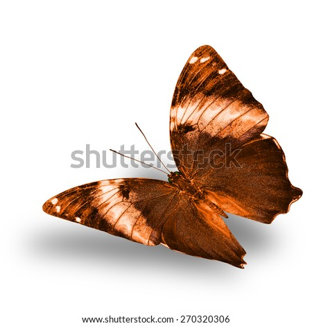 Beautiful flying brown butterfly with nice soft shadow on white background - stock photo