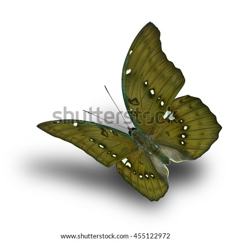 Beautiful flying brownish to dark grey-green butterfly, the Great Marquis (euthalia dunya) on white background with soft shadow beneath, exotic nature - stock photo