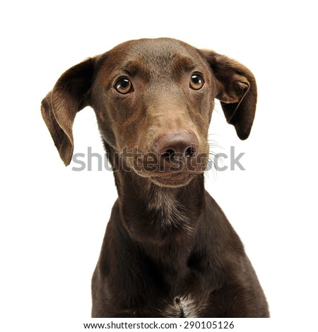 beautiful flying ears mixed breed dog portrait in white studio