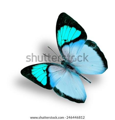 Beautiful flying fancy light blue butterfly (orange tip butterfly), with soft shadow beneath - stock photo