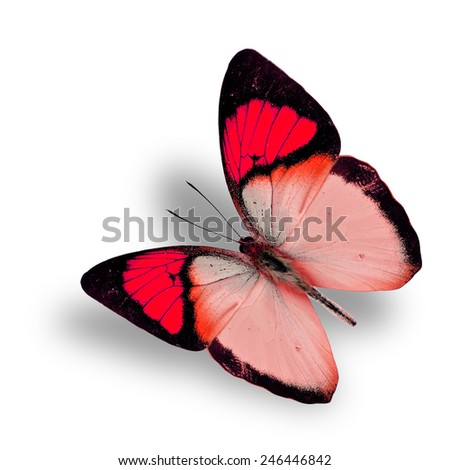 Beautiful flying fancy red butterfly (orange tip butterfly), with soft shadow beneath - stock photo
