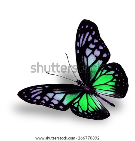 Beautiful Flying Green Butterfly on white background with soft shadow beneath - stock photo