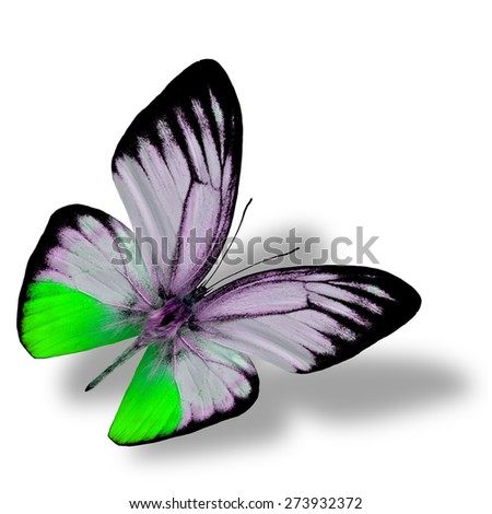 Beautiful flying green butterfly, the orange gull butterfly in fancy color profile on white background with nice soft shadow beneath - stock photo