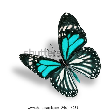 Beautiful flying light blue butterfly, white tiger in fancy color profile, with soft shadow beneath - stock photo
