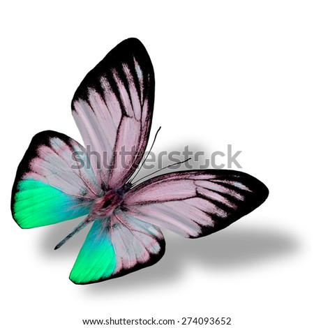 Beautiful flying light green butterfly on white background with nice soft shadow beneath - stock photo