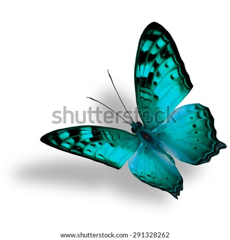 Beautiful flying light green butterfly, The Vagrant Butterfly stretches its back wings profile in fancy color isolated on white bacground with soft shadow beneath - stock photo