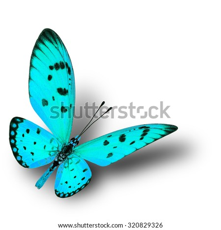 Beautiful flying light green butterfly with soft shadow beneath on white background - stock photo
