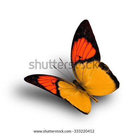 Beautiful flying orange butterfly on white background with shadow beneath, exotic butterfly - stock photo