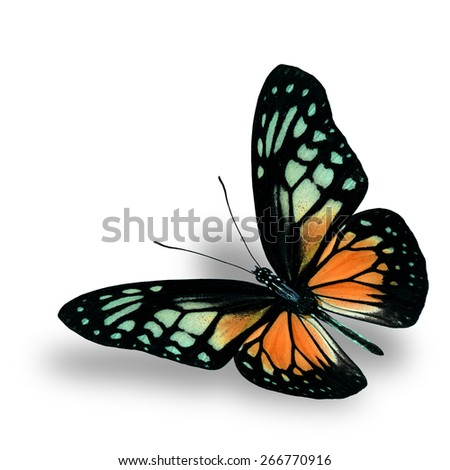 Beautiful Flying Orange Butterfly on white background with soft shadow beneath - stock photo