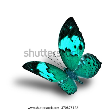 Beautiful flying pale green butterfly, the Rustic butterfly (Cupha bilberg) in fancy color profile with soft shadow beneath - stock photo