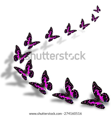 Beautiful flying pink butterflies in a great series of taking off with nice shadow beneath - stock photo