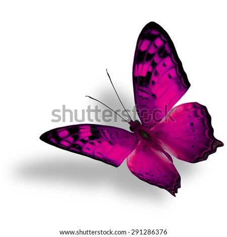 Beautiful flying pink butterfly, The Vagrant Butterfly stretches its back wings profile in fancy color isolated on white bacground with soft shadow beneath - stock photo