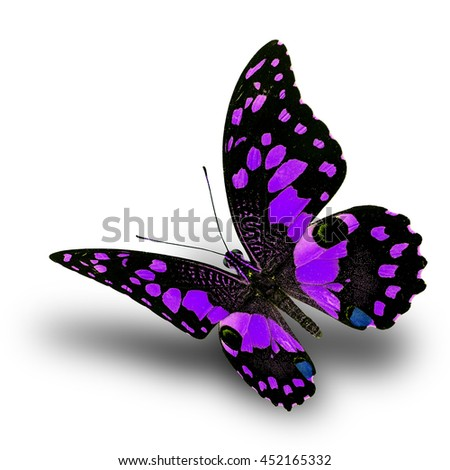 Beautiful flying purple butterfly, Lime butterfly (Papilio demoleus) in fancy color profile on white background with soft shadow beneath - stock photo