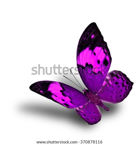Beautiful flying purple butterfly, the Rustic butterfly (Cupha bilberg) in fancy color profile with soft shadow beneath - stock photo