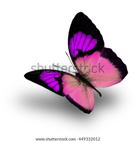 Beautiful flying purple butterfly, the Yellow Orange Tip (Ixias pyrene) in fancy color profile on white background with soft shadow beneath - stock photo