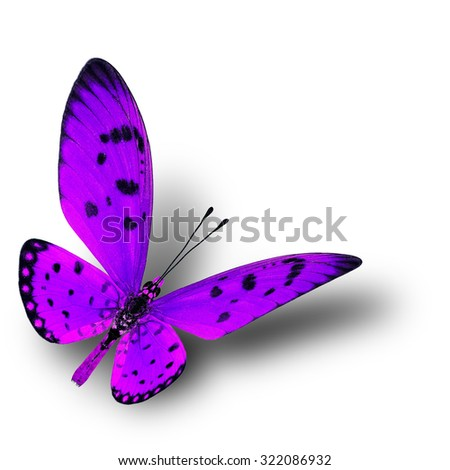 Beautiful flying purple butterfly with soft shadow beneath on white background, fire butterfly - stock photo