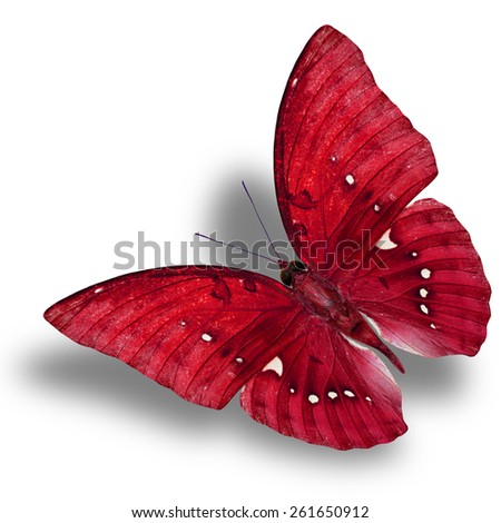 Beautiful Flying Red Butterfly (Great Marquis) with nice shadow beneath isolated on white background - stock photo