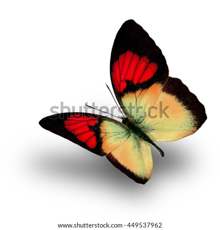 Beautiful flying red butterfly, the Yellow Orange Tip (Ixias pyrene) in fancy color profile on white background with soft shadow beneath - stock photo