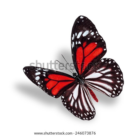 Beautiful flying red butterfly, white tiger in fancy color profile, with soft shadow beneath - stock photo