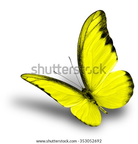 butterfly on yellow color - photo #18