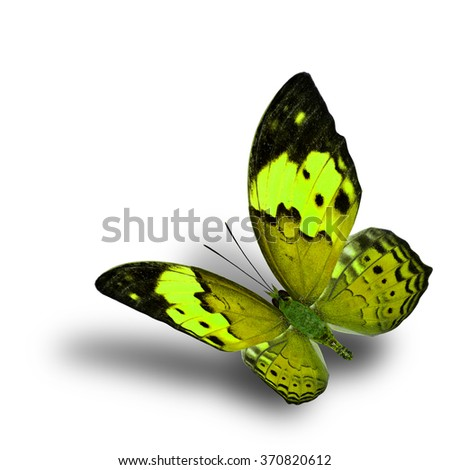 Beautiful flying yellow butterfly, the Rustic butterfly (Cupha bilberg) in fancy color profile with soft shadow beneath - stock photo
