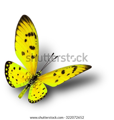 Beautiful flying yellow butterfly with soft shadow beneath on white background - stock photo
