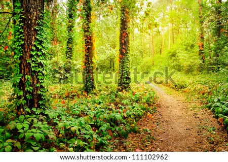 Beautiful foot path in the colorful autumn forest illuminated by morning sun - stock photo
