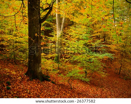 beautiful forest - stock photo