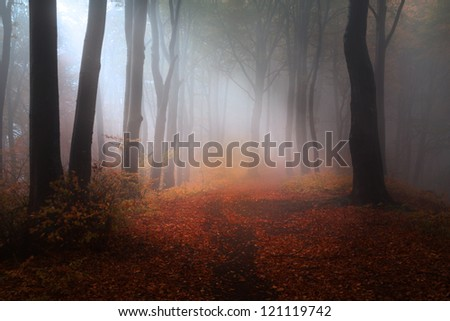 Beautiful forest during a foggy autumn day | late autumn in November - stock photo