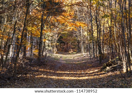beautiful forest in indian summer light in autumn